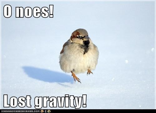 bird,floating,Gravity,lost,o noez,snowing
