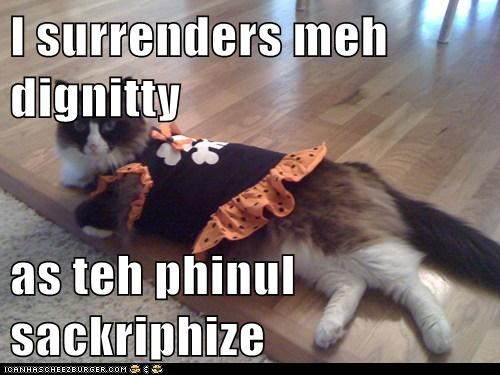 Cheezburger Image 5994927360