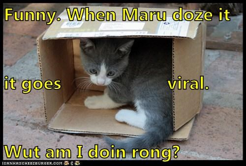 box,comparison,confused,doing,doing it wrong,FAIL,maru,sitting,wrong