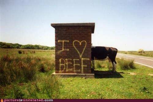animal-non-human Beef canabalism cow wtf - 5995049984