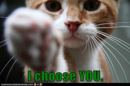 best of the week cat Cats choice choose decision Hall of Fame human i choose you paws pointing tabby you - 5995093760