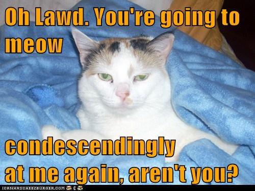 Oh Lawd Lolcats Lol Cat Memes Funny Cats Funny Cat