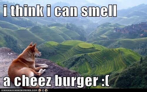 Cheezburger Image 5995702528
