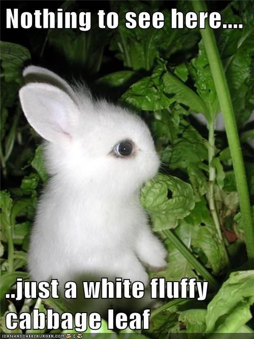 Bunday,bunnies,cabbage,camouflage,Fluffy,fool,nothing to see here
