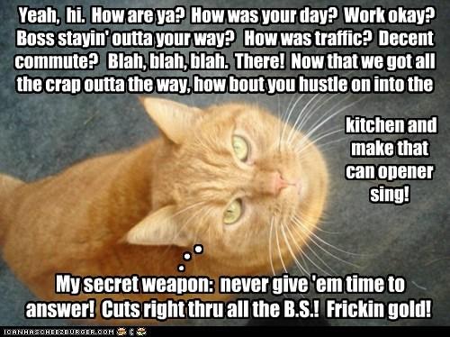 Shhh Itll Be Our Little Secret Lolcats Lol Cat Memes