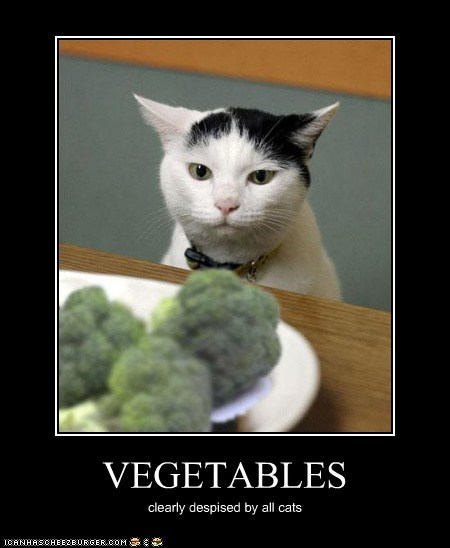 Lolcats - lol | cat memes | funny cats | funny cat pictures with ...