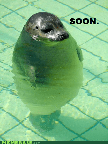 float,pool,seal,SOON,water