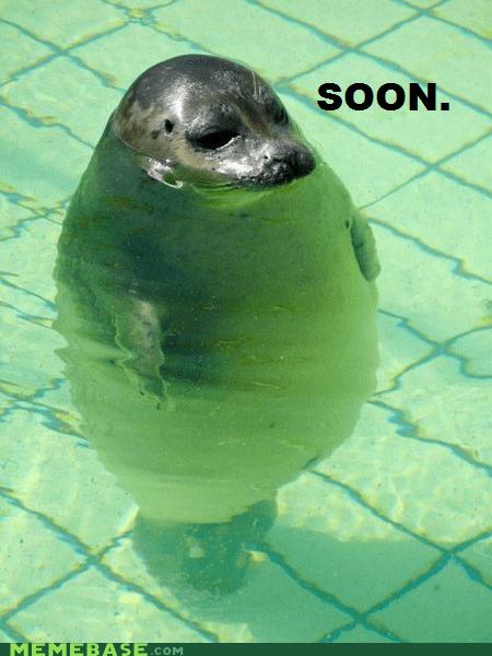 float pool seal SOON water - 5996152576
