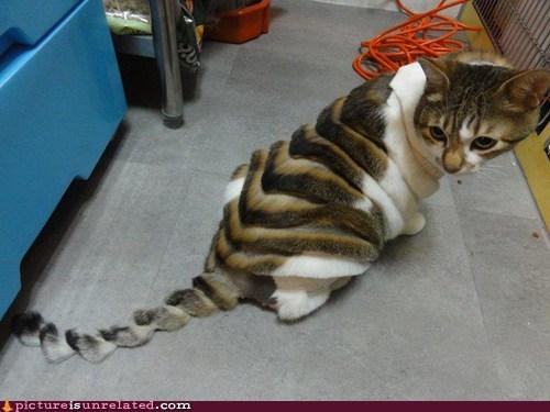 best of week cat fashion shopped pixels - 5996313600
