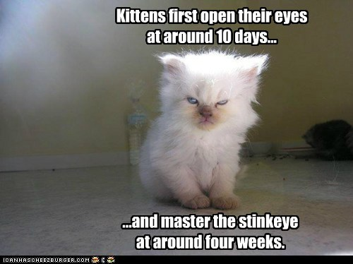 caption,Cats,eyes,facts,first,kitten,mastery,open,stink eye,time,timeline