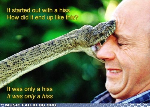 hiss KISS mr brightside pun snake the killers - 5996855552