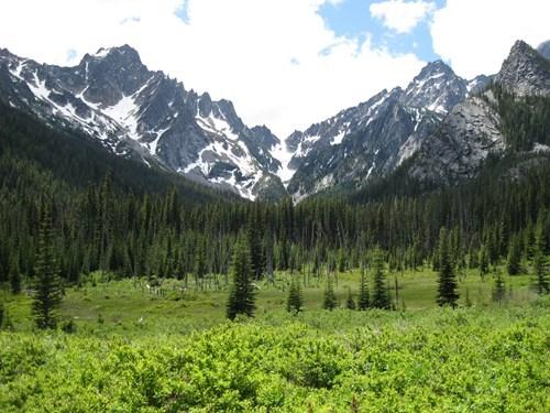 Forest mountains washington