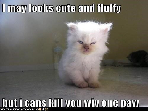 I may looks cute and fluffy  but i cans kill you wiv one paw