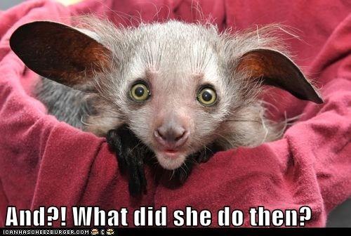 aye aye ears gossip hear listen monkey pocket talk - 5998892800