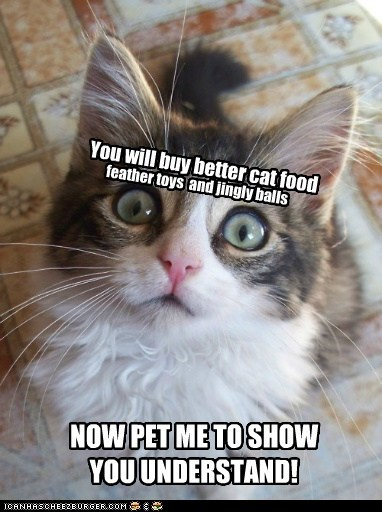You will buy better cat food
