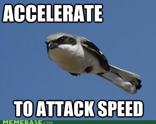 african attack bird Memes swallow - 5999067904