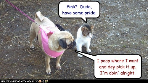 cat dogs funny puggle - 5999342080