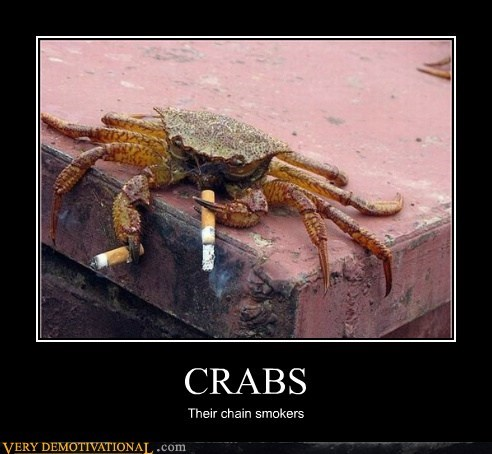 chain smoking cigarettes crabs hilarious wtf - 5999366656
