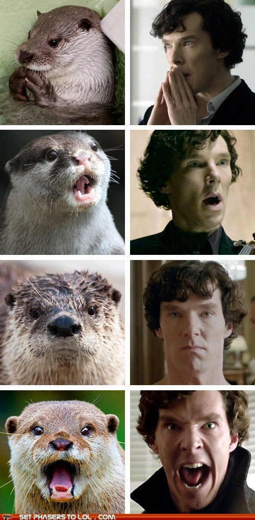 benedict cumberbatch,best of the week,faces,looks like,otters,Sherlock,sherlock bbc