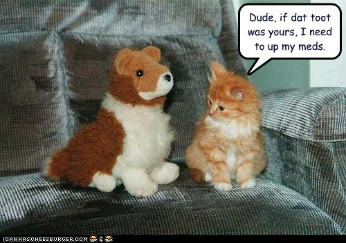 confused,fart,kitten,meds,stuffed animal,tabby,toot,up