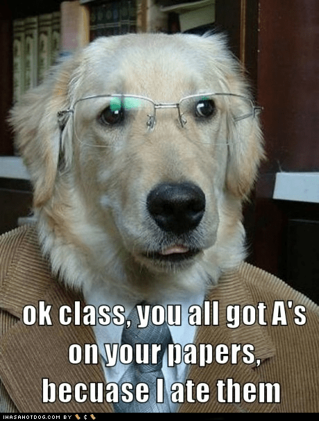 best of the week dogs funny golden retriever Hall of Fame meme professor dog - 6000162560