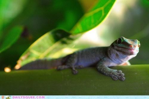 branch gecko lizard sunny toes - 6000348160