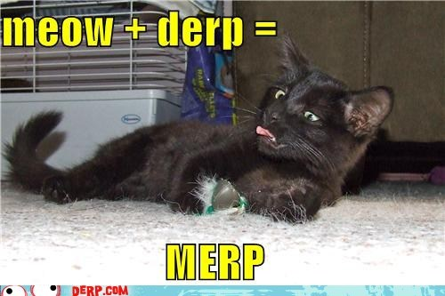 Meme of a derp cat asking about mixing it with a meow to merp