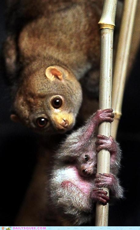 baby bamboo big eyes marsupial mom nocturnal whatsit - 6000401408