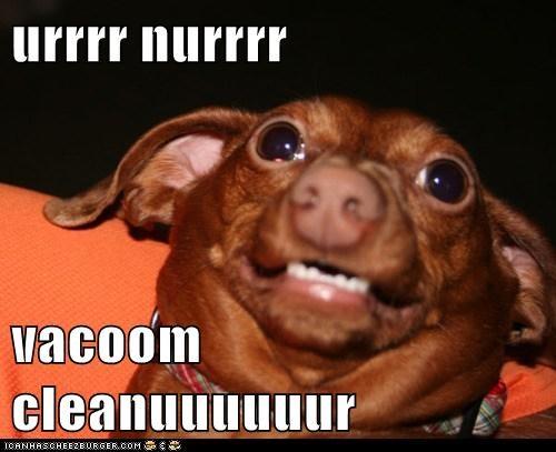 derp,goggie,oh no,vacuum
