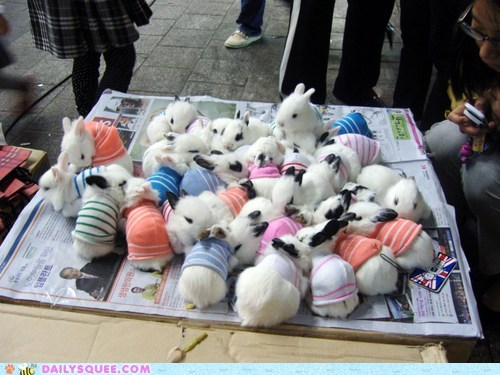 best of the week,bunnies,bunny,die,dressed up,Hall of Fame,lots,squee,sweaters