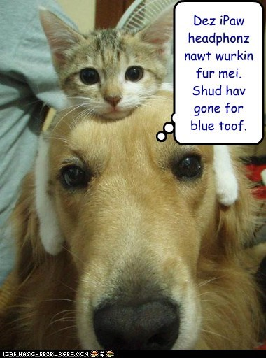 apple bluetooth Cats dogs funny golden retriever headphones kitteh phones technology - 6000683776