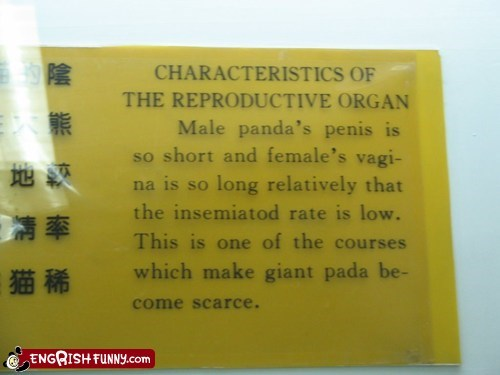 China chinese engrish panda scarce sign - 6000829440