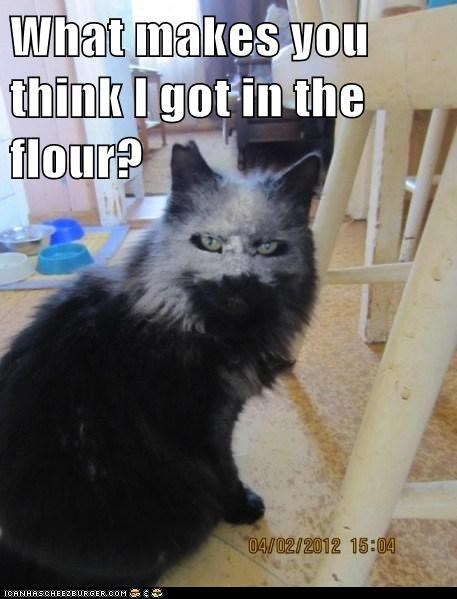 accident best of the week caption Cats denial evidence face faking it flour Hall of Fame ignorance mess question - 6001166336