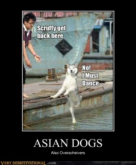 asian,dogs,hilarious,overachiever,wtf