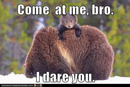 come at me bro i dare you animal comedy animal comedy funny