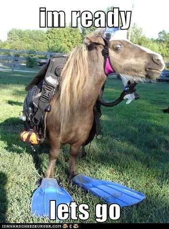 adventure dive explore horse ocean prepared ready scuba water