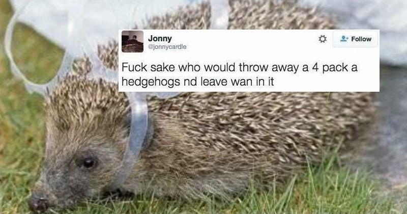 humor scottish twitter ridiculous culture - 6002181