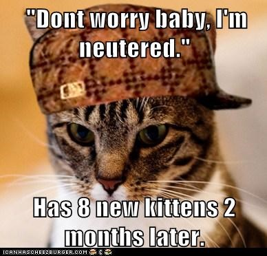 """Dont worry baby, I'm neutered."" Has 8 new kittens 2 months later."