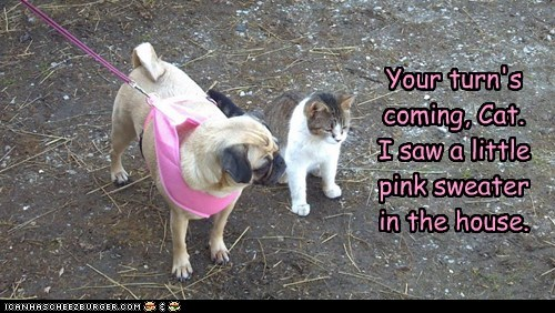 cat,dogs,funny,puggle