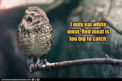 Beef food meat noms Owl red small tiny
