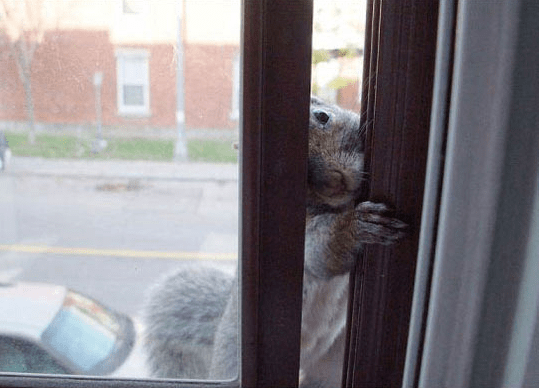 aww squirrel cute visit food - 6003717