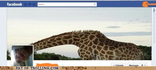 cover photo,facebook,giraffes,timeline