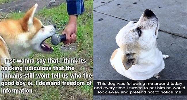dogs dog memes funny memes Memes animal memes - 6003973