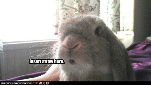 Bunday,bunny,creme egg,drinking,easter,insert,straw