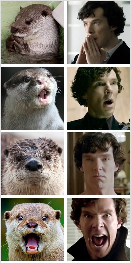 benedict cumberbatch,fandom,It Came From the Interwebz,look alike,otters,cumberbotter