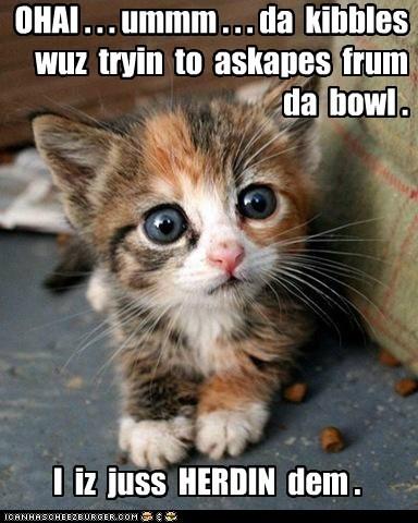 excuse explanation kibble kitten mess noms story - 6004042496