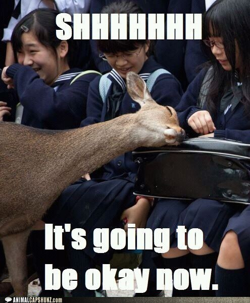 comfort deer friends Japan love nuzzle students