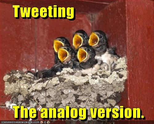 analog baby birds fledgling mom nest old outdated pun social network tweet twitter yell - 6004160768