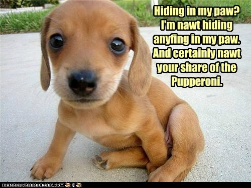 cyoot cyoot puppy ob teh day dogs funny hiding paws pepperoni puns