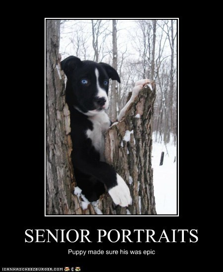 cyoot demotivational dogs funny - 6004353536